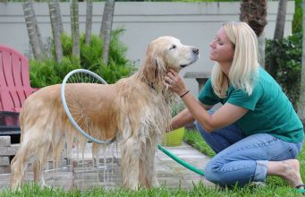 4 Amazing Dog Gadgets available online
