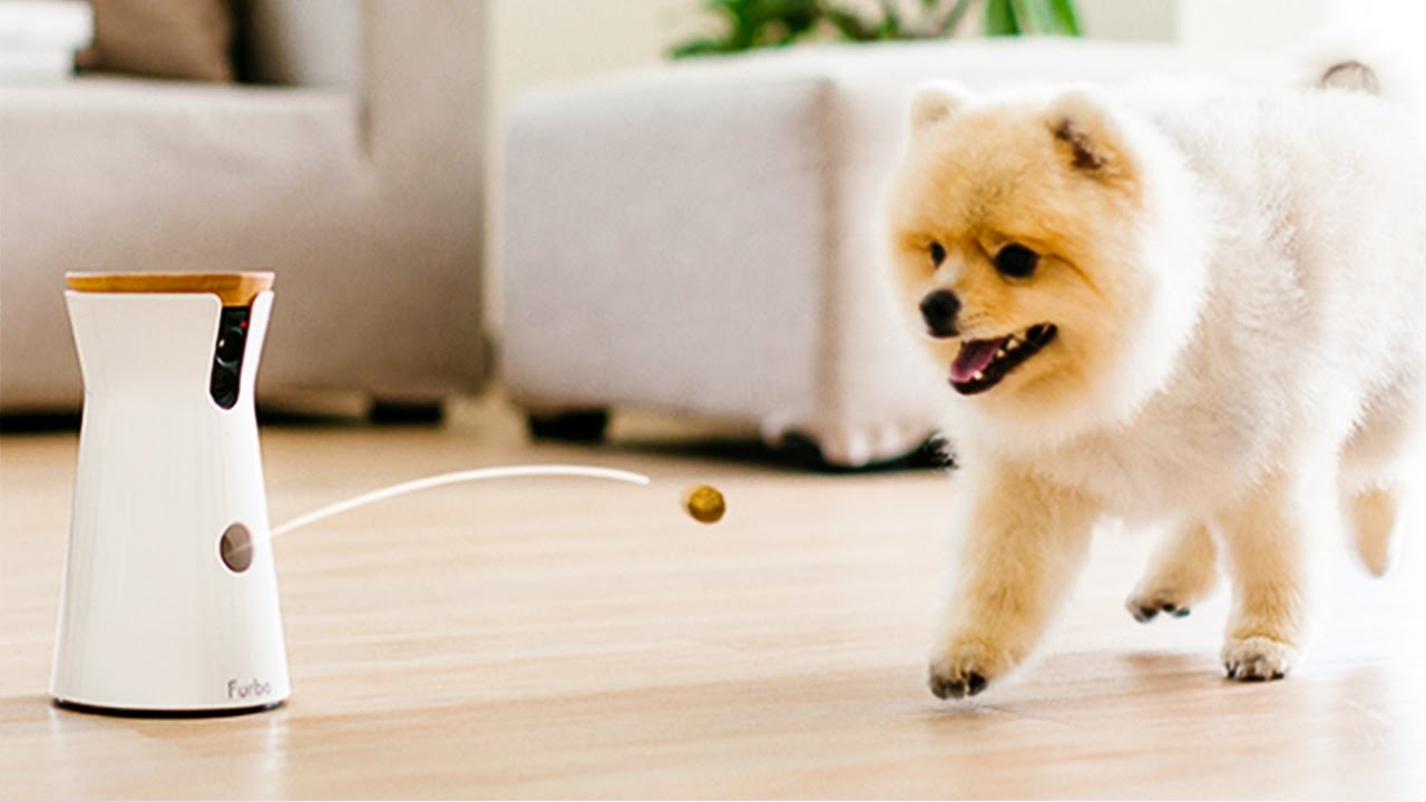 Dog Gadgets или Gadgets for dogs