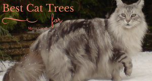 Best Cat Trees for Maine Coons