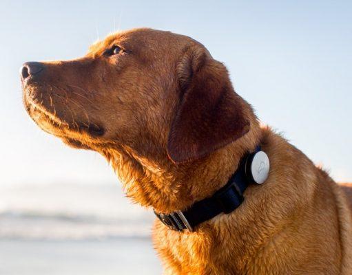 UKdog collars