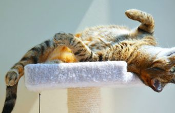 Tips For Purchasing Best Cat Trees