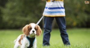 Tips For Finding The Right Dog Lead