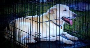 Wondering how much to spend on dog kennel See coop cages Australia
