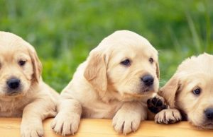 Promoting Dog Health How to Effectively Clean their Kennels