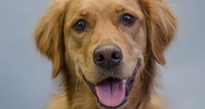 Capture the Memories of Your Pet with Pet Photography Brisbane