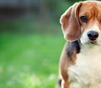 Train A Dog Without Treats
