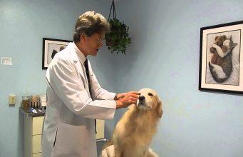 veterinary clinic Virginia Beach